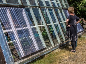 Shook's Garden Tour – Passive Solar Greenhouse